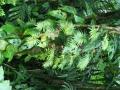Dafuer leuchendes Gruen im Wald ...