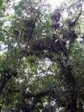 ... Wald und Wald und Wald ...