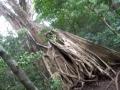 Und zwar im Naturpark: Rincon de la Vieja.