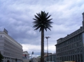 Kein Gag - eine (Plastik)- Palme auf dem Königsweg.